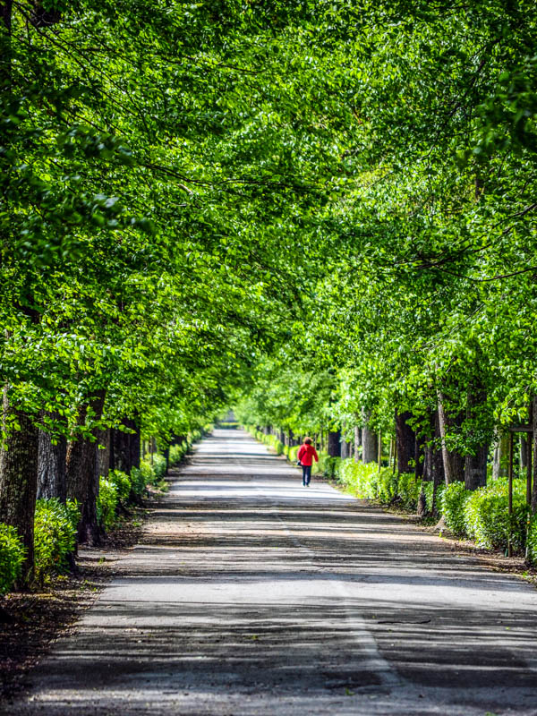 A path in the Parco delle Cascine, Florence. (Photo by Luca Daviddi)