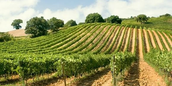 Tour wineries and vineyards near Siena